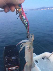 European Squid — Matthieu Ginier
