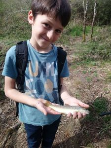 Brown Trout — Nicolas  Leyssenne