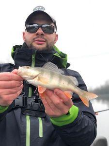European Perch — Julo Fishing