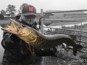 Northern Pike — Arnaud Lemaire