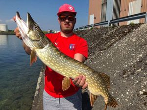 Northern Pike — Ado Imsirovic