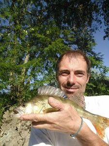 European Perch — Donat Rueff