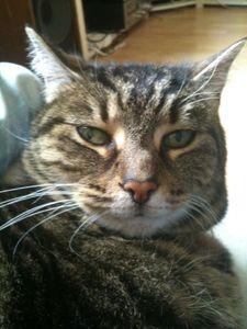 Chat déprimée — Martin _rouxtengle