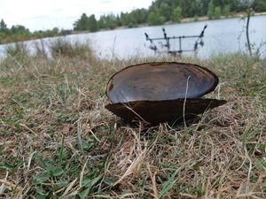 Blue Mussel — Steven Launay