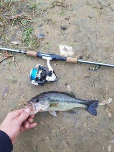 Black Bass (Achigan à Grande Bouche) — Thomas  maisueche