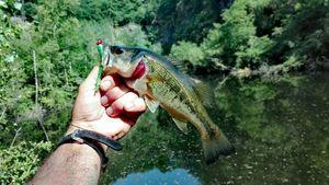Smallmouth Bass — Xubakal EH