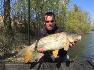 Common Carp — Mickael Bidault