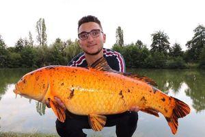 Koï Fish — Lucas Zanella