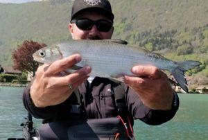 European Whitefish — Sébastien Fishin74carna