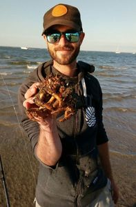 Common Spider Crab — The Biflator