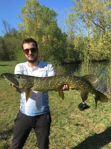 Northern Pike — Bob fish 🎣
