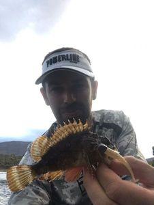 Brown Scorpionfish — Jonathan Delaune