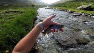 Brook Trout — Fabien Piquet