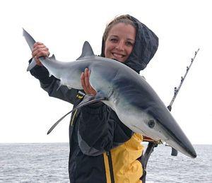 Requin Bleu (Peau Bleue) — Sebcricri Fishing
