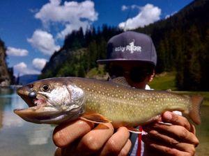 Brook Trout — Sacha Bosman Fishing