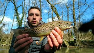 Brown Trout — Kévin Martinet