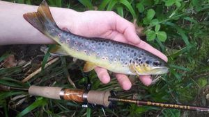 Brown Trout — Theo Lamy