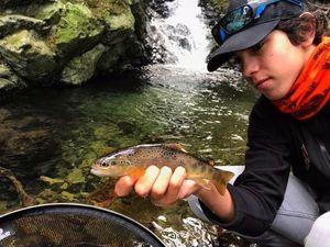 Brown Trout — Ghjuvà Azara-Mariani