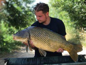 Common Carp — Dorian Colson