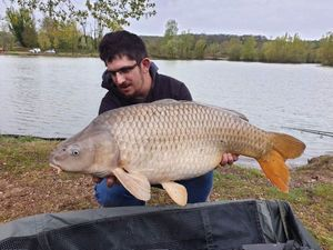 Common Carp — Nathan Branlé