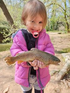 Brown Trout — Mrik Dsb