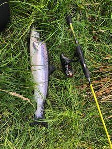 Atlantic Salmon (Landlocked) — Olivier Denisot