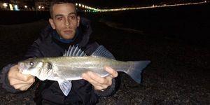 European Bass — Mehdi Ben