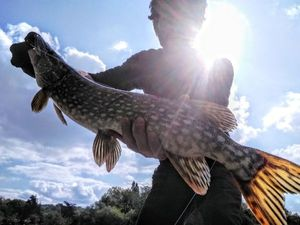 Northern Pike — Joseph Gonnord