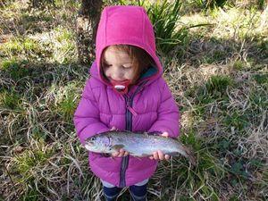 Rainbow Trout — Mrik Dsb
