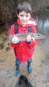 Northern Pike — Nicolas  Leyssenne