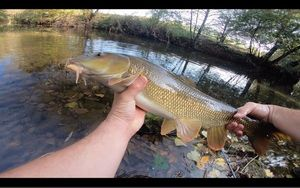 Barbel — Julo Fishing