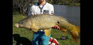 Common Carp — multifishing