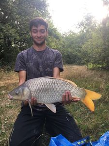Common Carp — Maxence DOMENECH