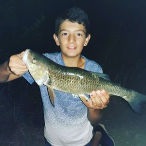 Chub — Lucas Fishing