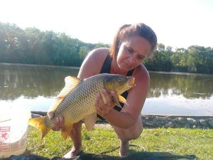 Common Carp — Chris Sampson