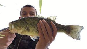 Largemouth Bass — Téo Porrot