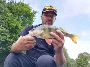 Yellow Perch — Yoann Fortry
