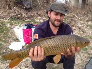 Common Carp — laurent duranton