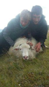 mouton — 🐟les 3 pêcheurs🐟 ⭐⭐⭐