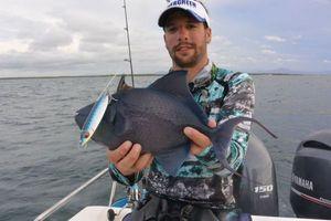 Redtoothed Triggerfish — Nicolas Xmylife