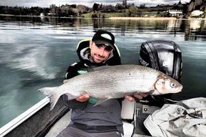 European Whitefish — jimmy maistrello guide de pêche
