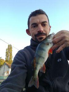 European Perch — Cedric Lacipiere