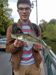Zander — perckarna fishing