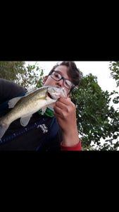 Largemouth Bass — Yugo Fishing