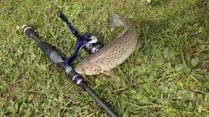 Brown Trout — Flo Lidiio