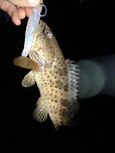 Orange Spotted Grouper — saônic fish