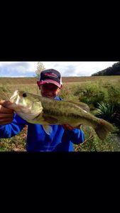 Largemouth Bass — Lucas Estrade