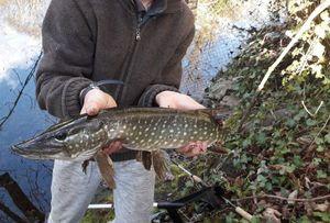 Northern Pike — Erwan Fishing