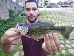 Largemouth Bass — Tacos Boy