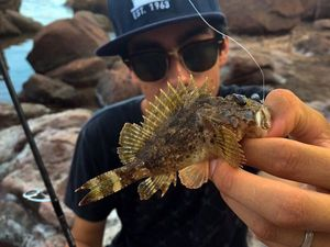Brown Scorpionfish — Sacha Bosman Fishing